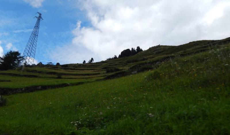 Tappeto verde... di Gufina