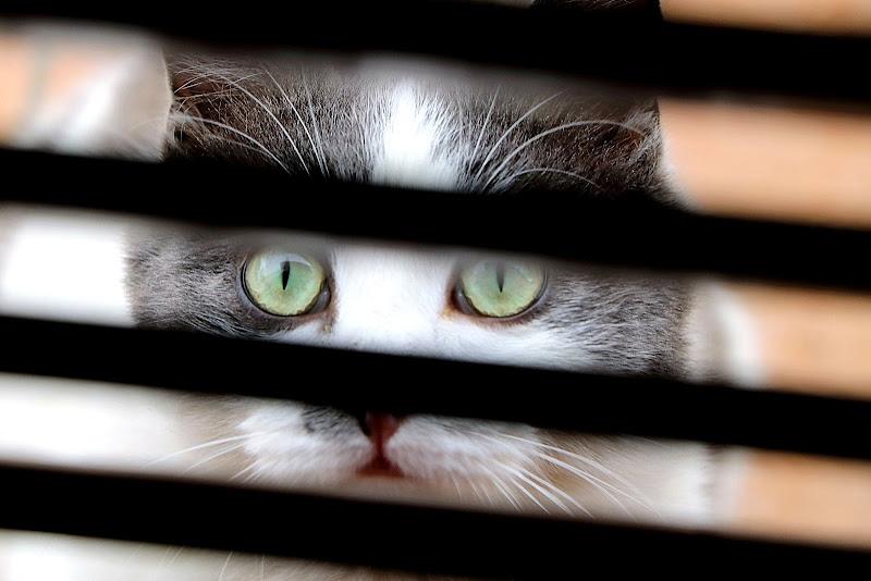 La spia.... di Carla Roganti