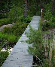 Photo: Footbridge  at Franklin Parker Preserve