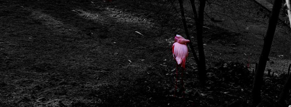 Piume rosa di Elisabetta Di Franco