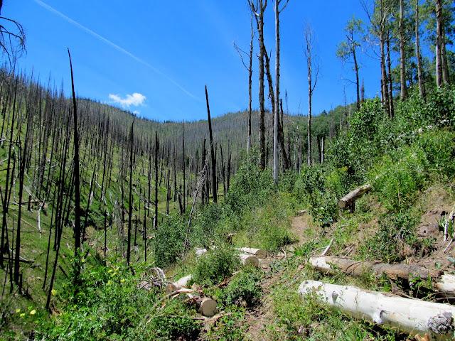 Freshly-cleared trail