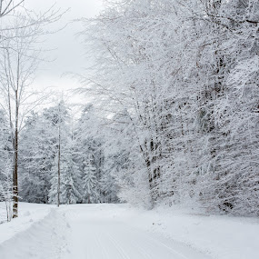 Frost by Adrijan Pregelj - Landscapes Forests ( winter, cold, snow, frost, trees, road )