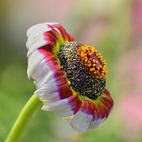 Unknown beauty by Kamal Mallick - Flowers Single Flower