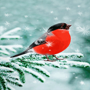 download Snowy Red Bird LWP apk