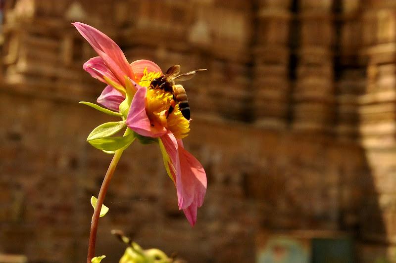 Fiore tra i templi! di Italo16