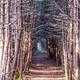 End of the Tunnel by Richard Michael Lingo - Landscapes Forests ( sky, trail, forest, newfoundland, landscape,  )