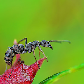 Can I Fly? by Irfan Marindra - Animals Insects & Spiders