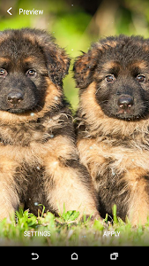 German Shepherds LWP screenshot 2