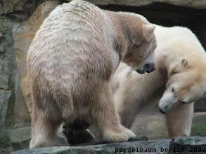Photo: Da ist sie ja - spielen wir eine Runde?