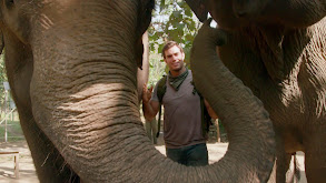 Nepalese Elephant Adventure thumbnail