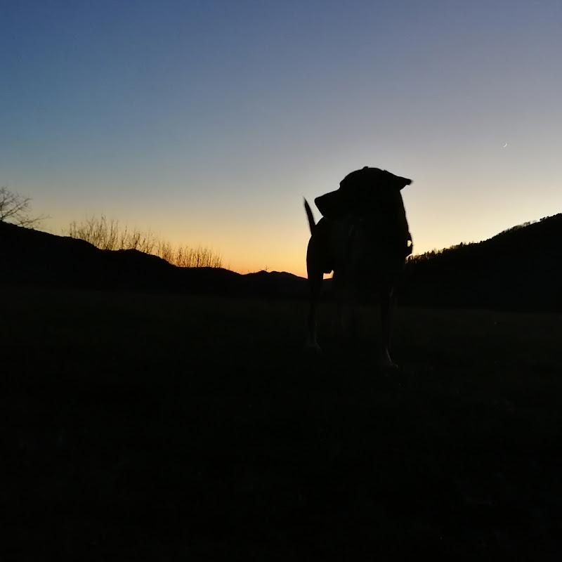 Profilo serale di ShadyDelle