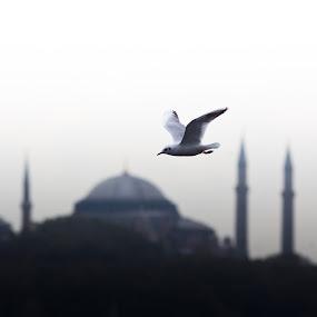 City Under My Wings by AhMet özKan - Buildings & Architecture Public & Historical ( hagia sophia, seagull, istanbul )