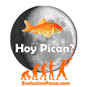 Hoy Pican