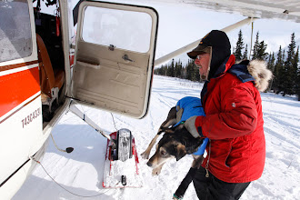 Photo: RHN - Bruce loads a dog