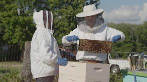 Bee Keeping thumbnail
