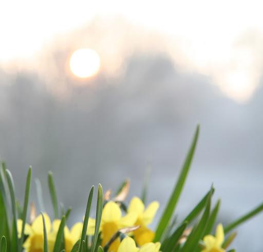 news-spring