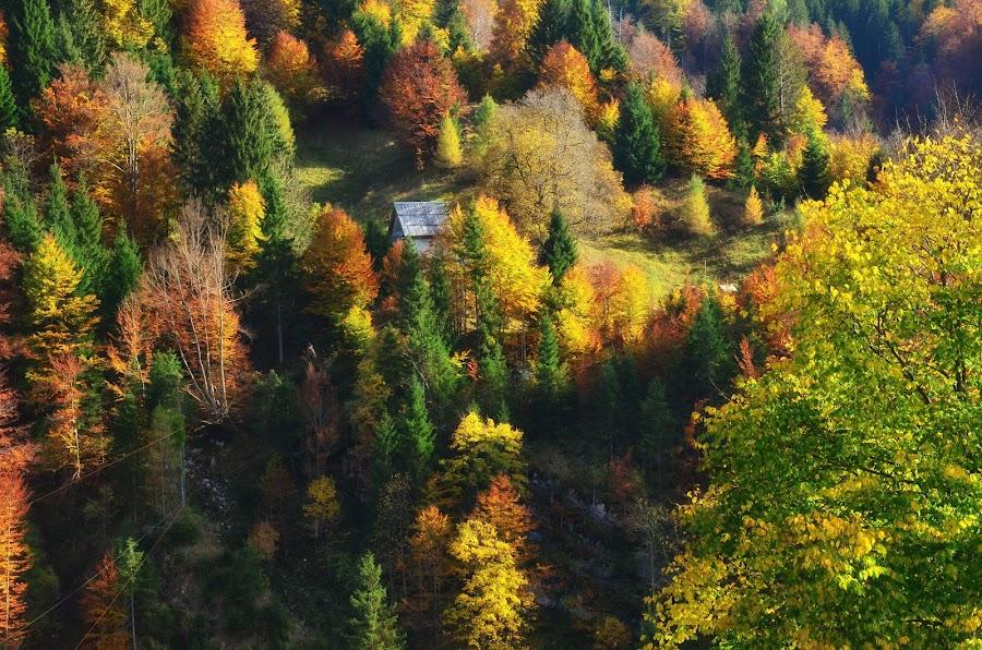 Osamljena hiška by Bojan Kolman - Landscapes Forests (  )