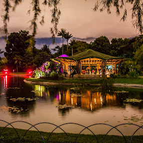 Magical Garden by Andrius La Rotta Esquivel - City,  Street & Park  City Parks ( amazing, city parks, night photography, awesome, beautiful )