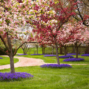 Floral Walk by Patrick Morgan - Landscapes Travel ( ohio, fine art, trees, flowers, spring )