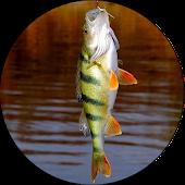 ВСЁ о рыбалке