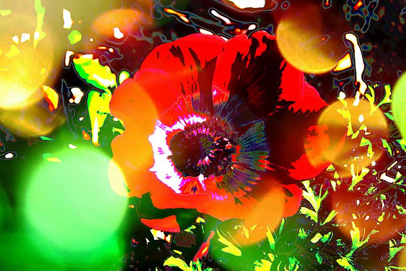Anemone in love di paolo.proietti.334
