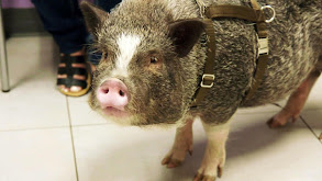 Hog Wild and Home Free thumbnail