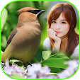 Bird Frame .. file APK for Gaming PC/PS3/PS4 Smart TV