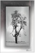 Foto: Baum an der Ruhr
