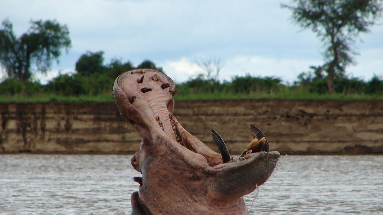 Watch Africa's Deadliest live
