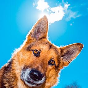 Baron by Jonicus Dudarev - Animals - Dogs Portraits ( baron, барон, dog, portrait )