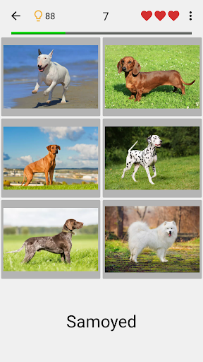 Dogs Quiz - Guess Popular Dog Breeds in the Photos Apk 1