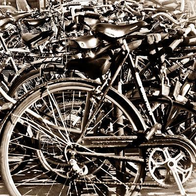 La giungla delle biciclette di g.paciphoto