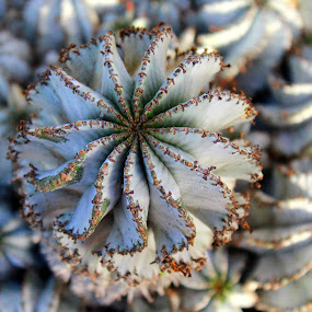 by Cecilia Sterling - Nature Up Close Other plants ( macro, desert, cacti, desert plant, cactus up close, close up, cactus )