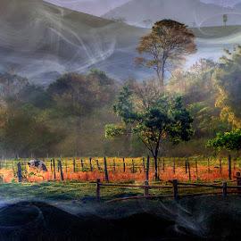Dreamland by Antonio Marciano - Uncategorized All Uncategorized