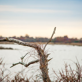 One Branch by Thomas Shaw - Nature Up Close Other Natural Objects ( sky, brush, north carolina, obx, tree, nikon d7200, clouds, outerbanks, branch, water, trees, east coast, nikon, coast, photography )
