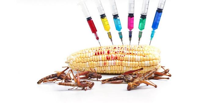 GMO Health Risks
