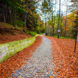 Leaves road by Stefan Sorean - Transportation Roads ( forest, curve, line, yellow, scenery, scenic, aerial, empty, scene, red, beautiful, path, mountain, trip, fall, leaves, road, car, ontario, national, highway, park, sky, journey, nature, woods, tree, asphalt, transport, way, transportation, foliage, sunlight, canada, background, autumn, travel, landscape, colorful )