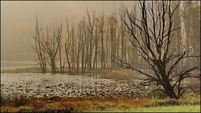 Lago di Gaiano..... di Delvecchio Dario