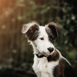 Rita by Krisztina Ajtai - Animals - Dogs Portraits ( puppy, dog, cute )