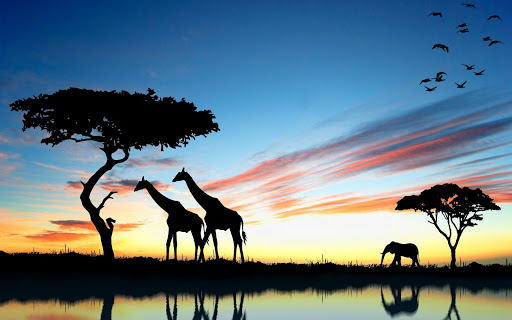Giraffe Live Wallpaper
