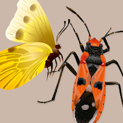App Icon for Key to Insect Orders – Revised Edition App in Czech Republic Google Play Store