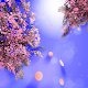 Cherry Blossom Live Wallpaper APK