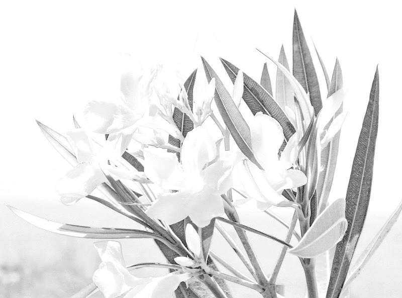 bianco floreale di simi1967