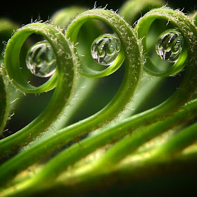 by Ribut Bagus - Nature Up Close Leaves & Grasses