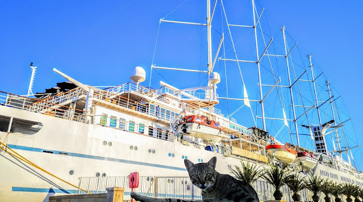 Llega el Wind Surf: el Puerto vuelve a recibir cruceros