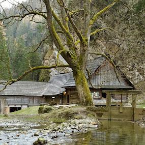 Mill  Kvačianska valley by Ferdinand Debnárik - Uncategorized All Uncategorized ( forests, water, hill, nature, path, trees, bows, valley, river )