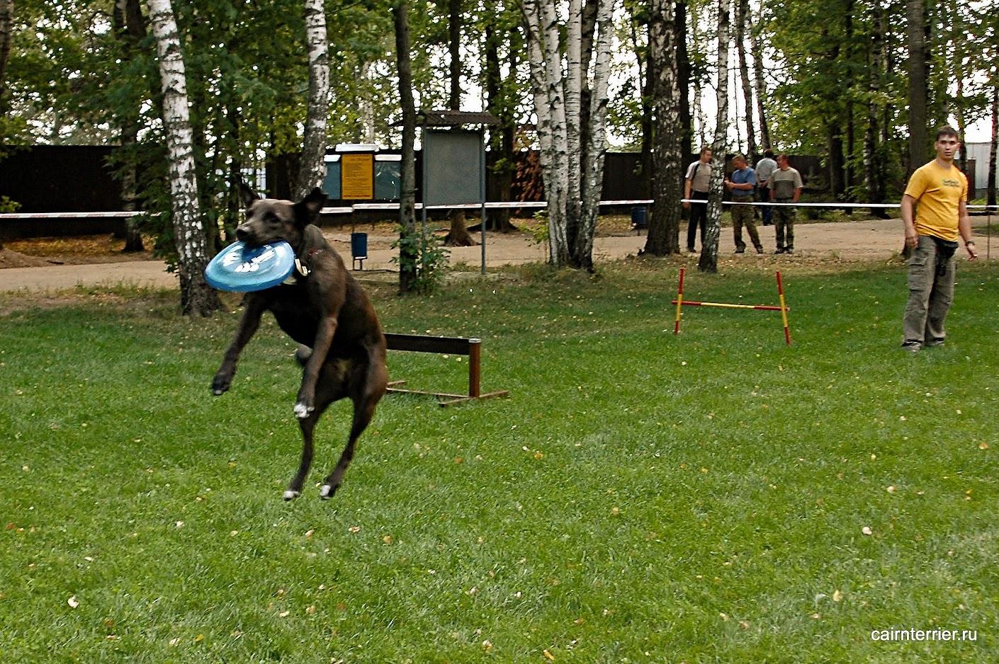 Фото Собаки, которая поймала диск оторвав при этом все четыре лапы от земли в прыжке.