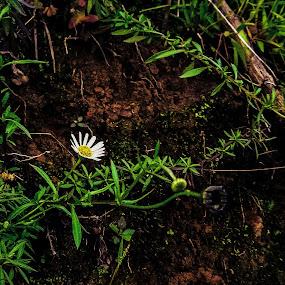 by Hrijul Dey - Flowers Flowers in the Wild
