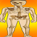 Body Parts - Skeletal System