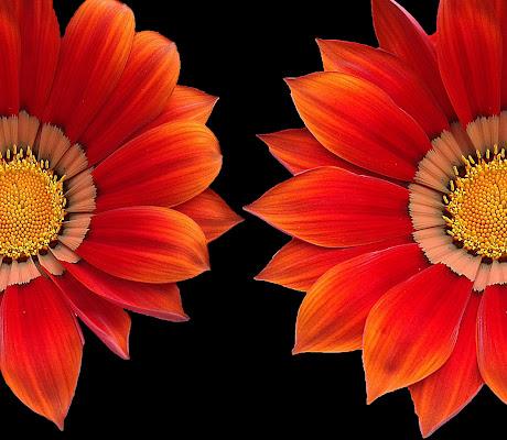 I fiori sono gli occhi con cui guardare la natura. (Gerhard Uhlenbruck) di _Chiara_